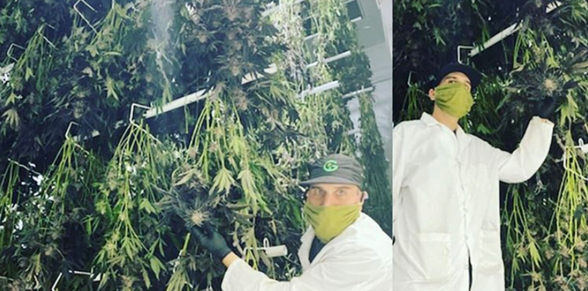 3-in-1 cannabis drying system installed in drying room