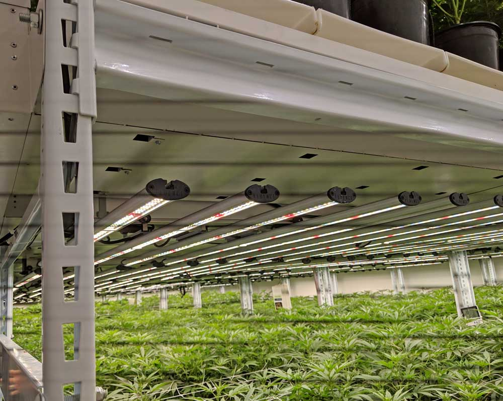 Lift and Grow Systems for movable racks