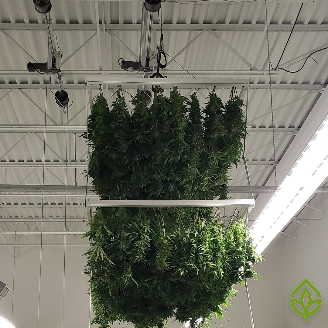 Flatbed Cannabis Drying Rack Side View