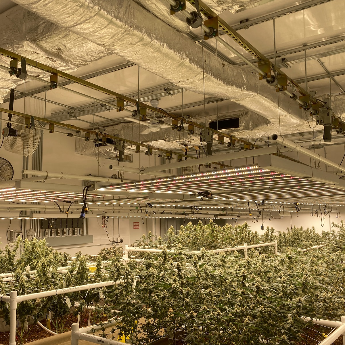 grow room light lifts at different heights