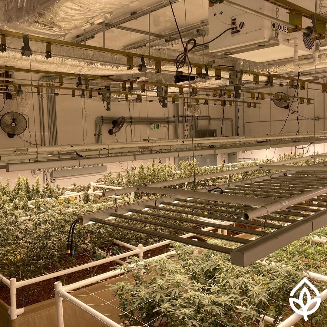 true organics grow room